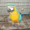 Pássaro silvestre preso em gaiola